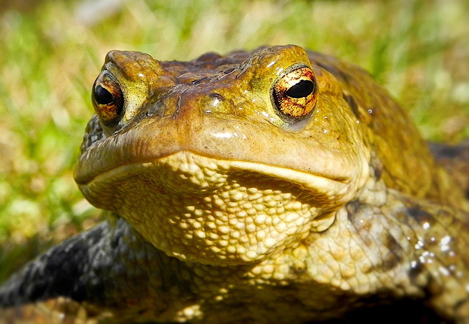 frog-1729430_1920