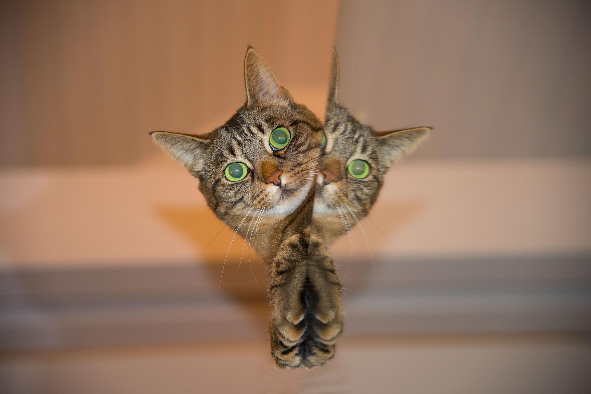 cat-697113_1920